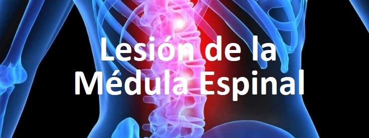 Lesiones de la médula espinal (LME) y accidentes automovilísticos